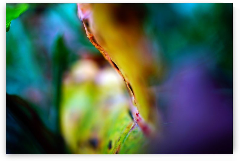 Abstract Macro Pop Colors 03 by Richard Vloemans Macro Photography