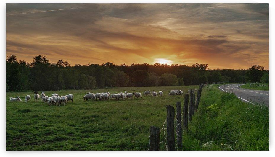 Au soleil couchant  by Adrien Cote photographe