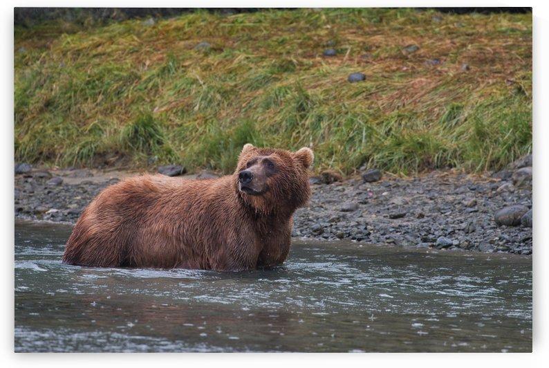 IMG_2838 by Alaska Dreaming