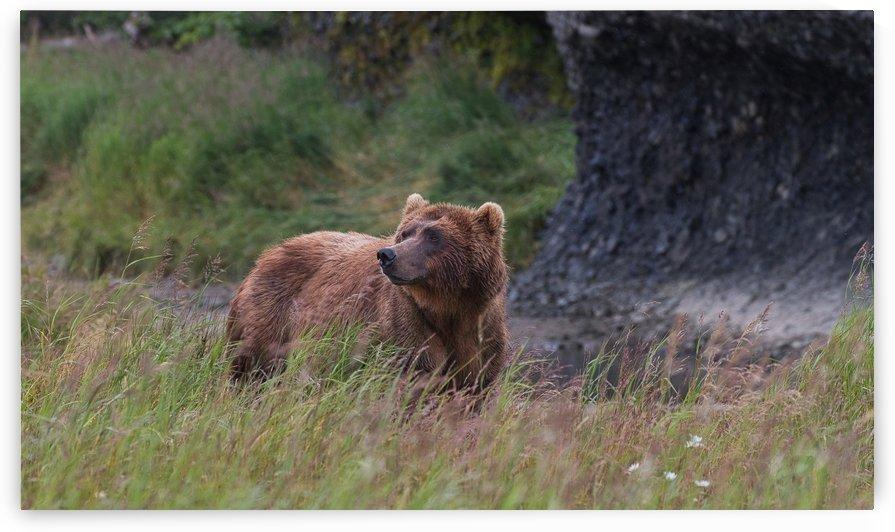 IMG_2732 by Alaska Dreaming