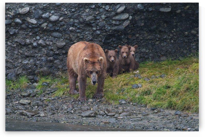 IMG_2839 by Alaska Dreaming