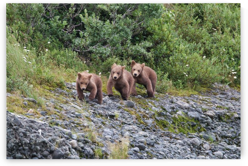 IMG_1067 by Alaska Dreaming