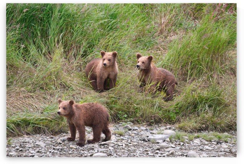 IMG_2163 2 by Alaska Dreaming
