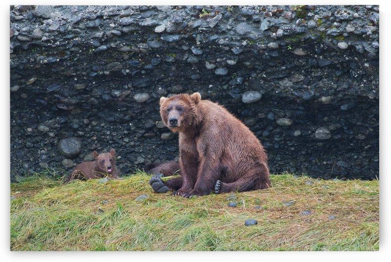 IMG_2936 by Alaska Dreaming