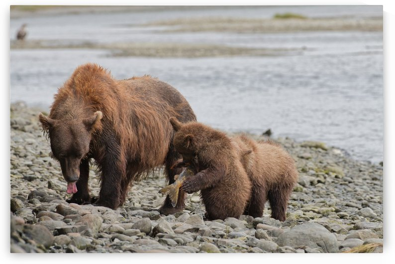 IMG_3089 by Alaska Dreaming