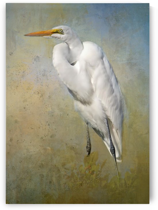 Great Egret by HH Photography of Florida