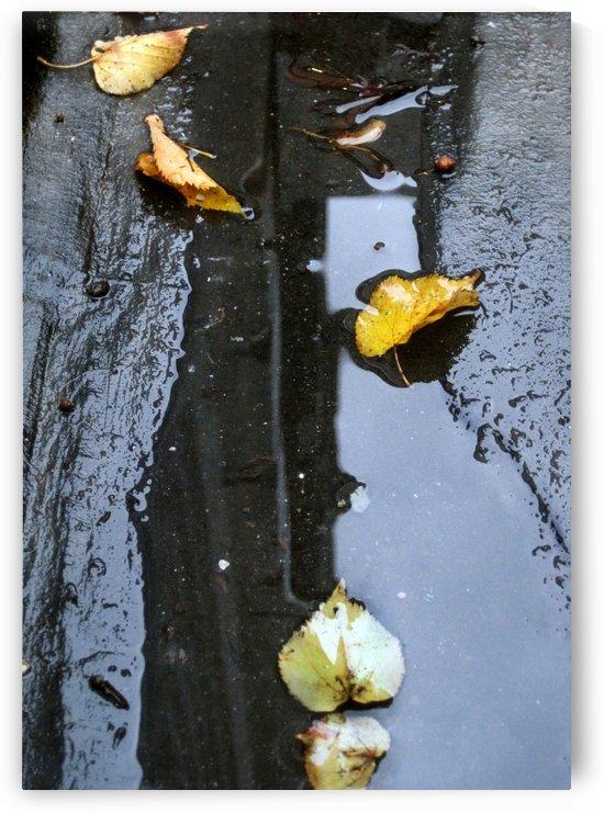 Floating Autumn Leaves by Jaeda DeWalt