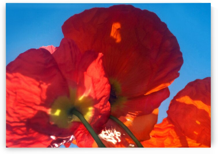 Red Poppy Sky by Jaeda DeWalt