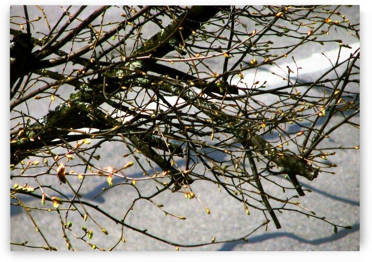 Barren Branches by Jaeda DeWalt
