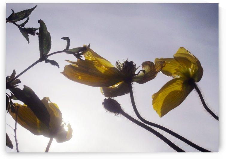 Anstract Yellow Flowers by Jaeda DeWalt
