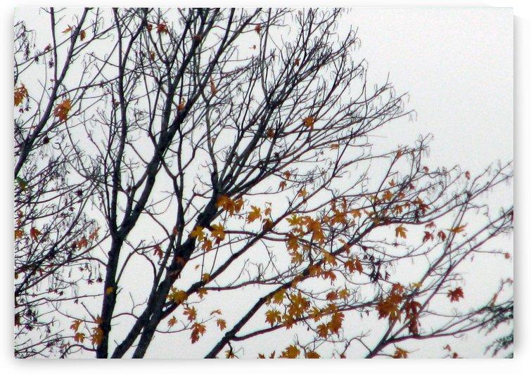 Abstract Autumn Branches 1 by Jaeda DeWalt