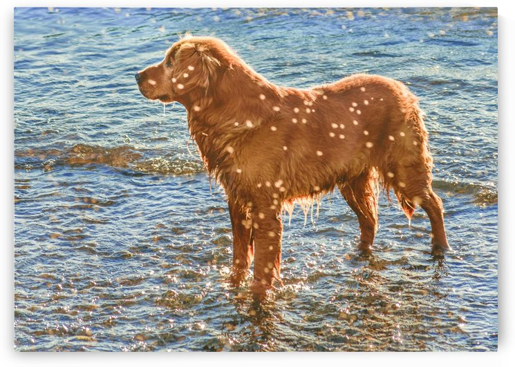 Brown Dog at Shore of Sea by Daniel Ferreia Leites Ciccarino