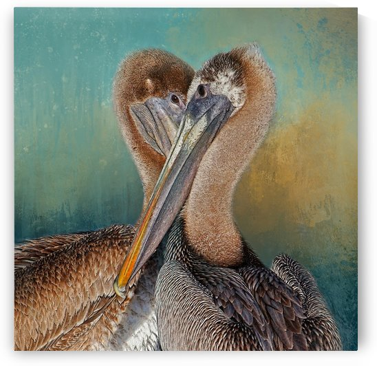 Eye 2 Eye-Heart 2 Heart-Brown Pelican  by HH Photography of Florida