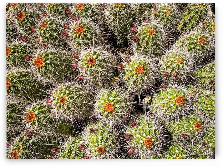 Cactus patch by By the C Media