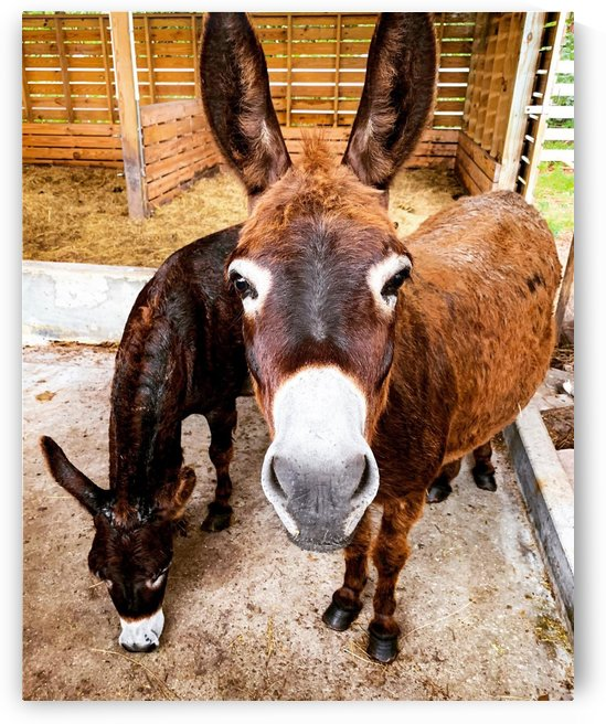 Donkey friends by By the C Media