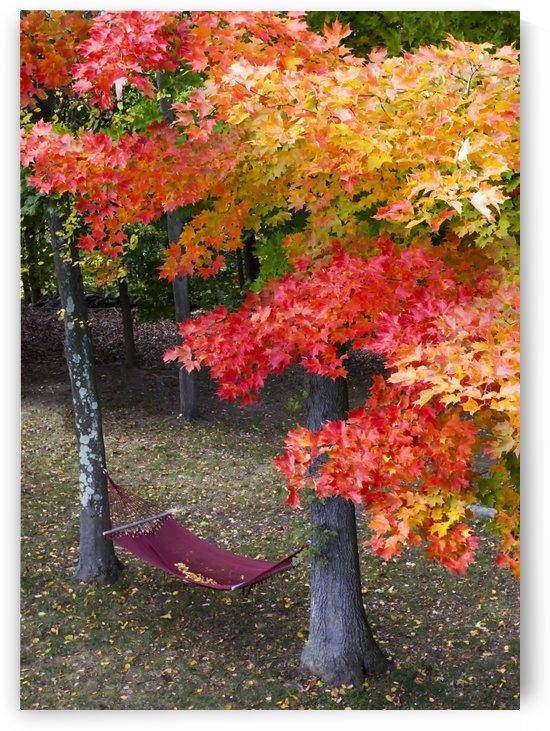 Autumn at Casa Feliz by Eliot Scher