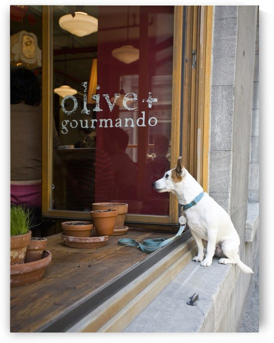 Pooch at Olive and Gourmando by Eliot Scher