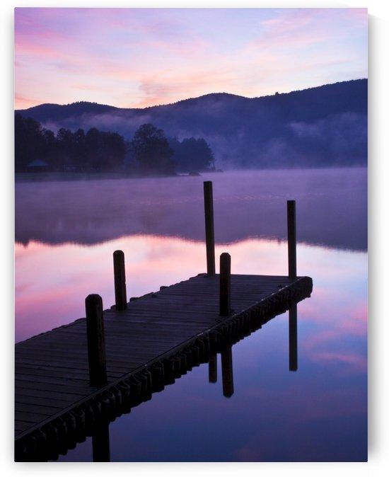 Lavender Morning by Eliot Scher