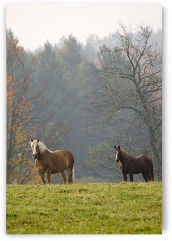 Autumn Horses by Eliot Scher