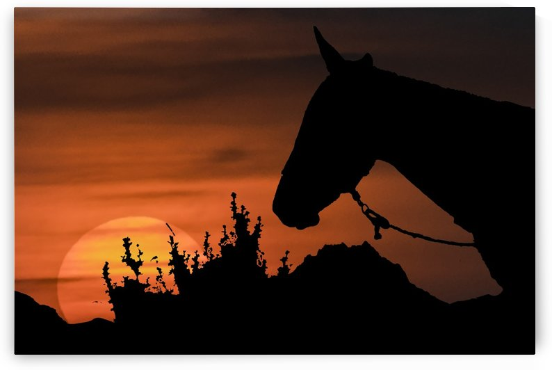 sunset scene with horse silhouette illustration by Daniel Ferreia Leites Ciccarino