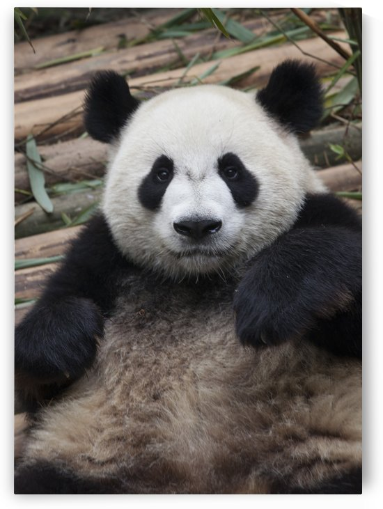 Pandarific by Eliot Scher