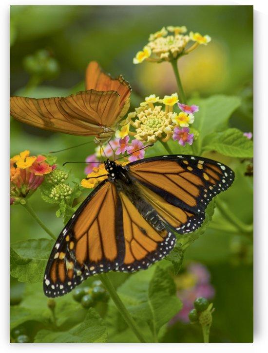 Monarch and Friend by Eliot Scher