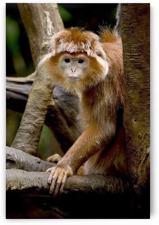 Monkey by Eliot Scher