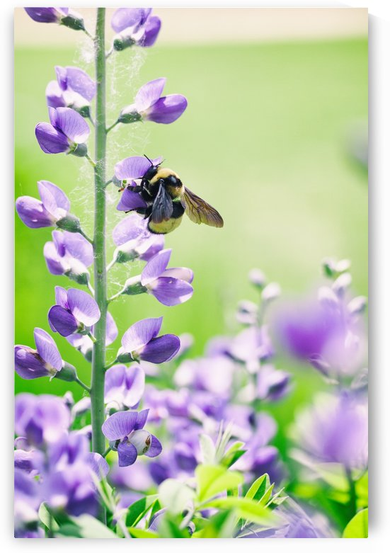 Bee In Flight 2 by Alexis Arnold