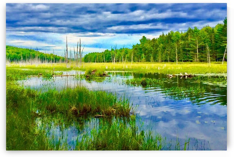 Maine Swamp by PB Photography