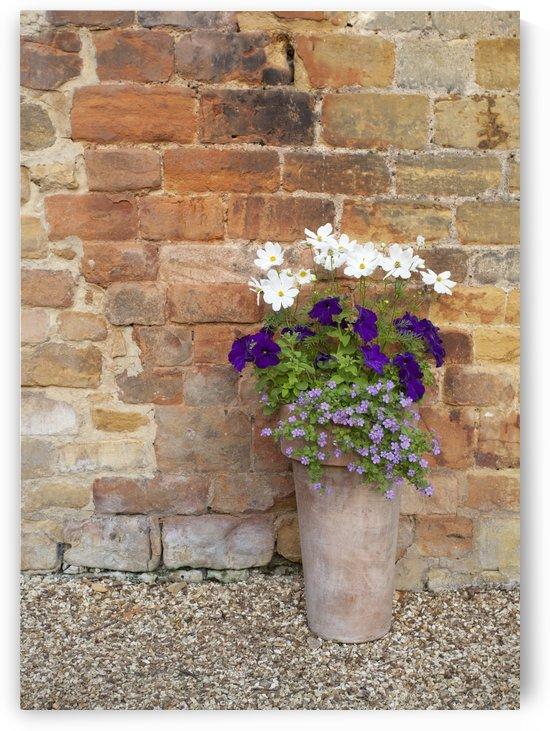 Bricks And Flowers by Eliot Scher