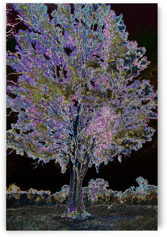 Tree of Dreams by Eliot Scher