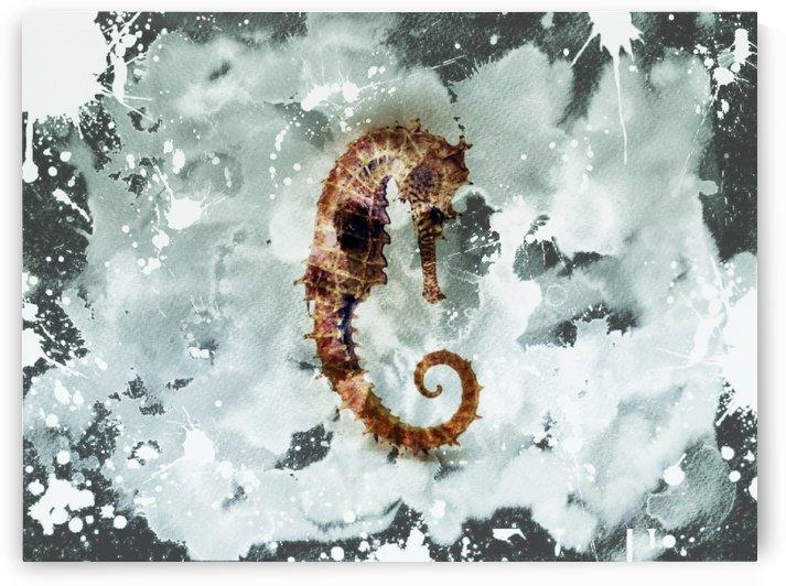 Seahorse by Gina Matarazzo