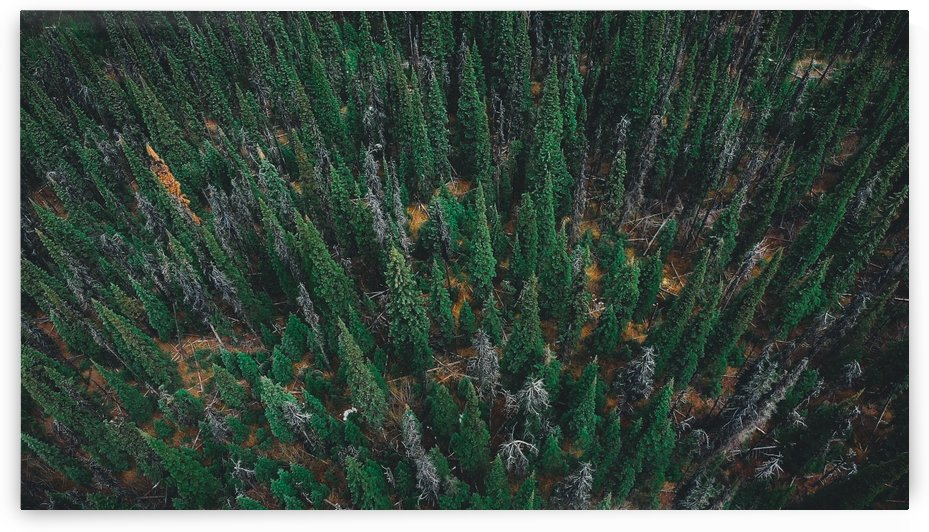 Trees From Above by Evan Hauk
