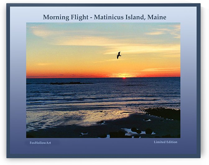 Morning Flight Matinicus Island by FoxHollowArt