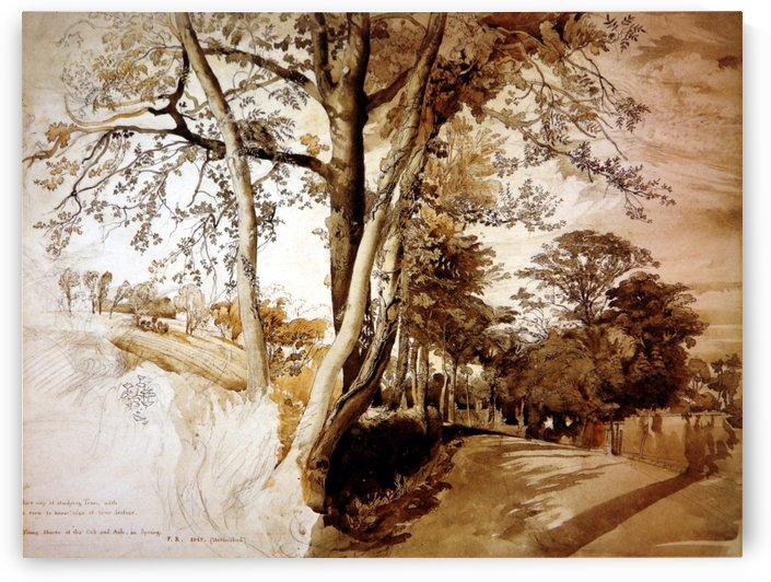 Trees in a lane by John Ruskin