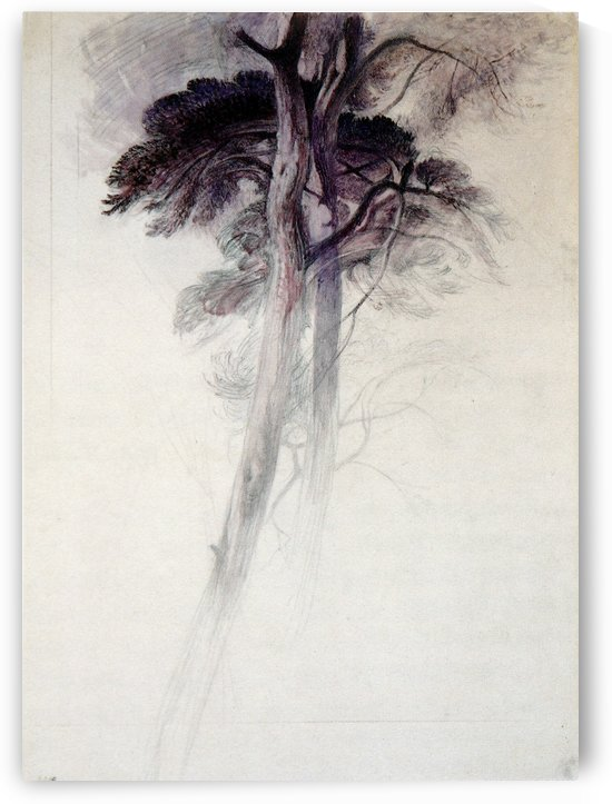 Study of Trees by John Ruskin