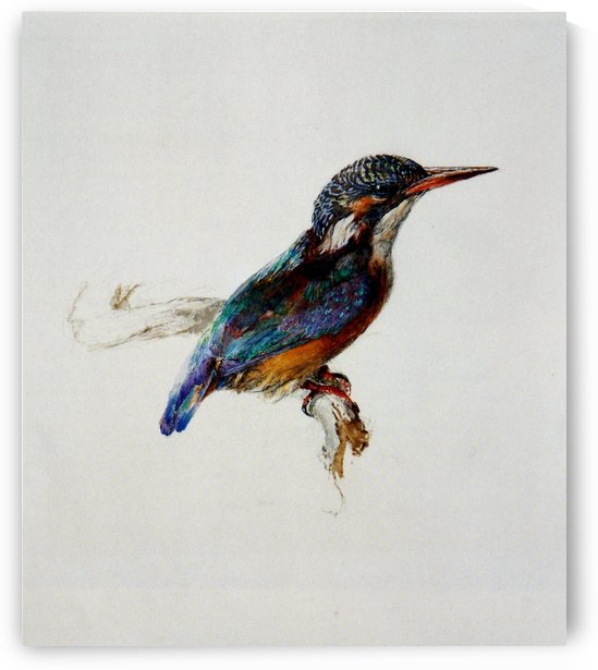Kingfisher Ruskin by John Ruskin
