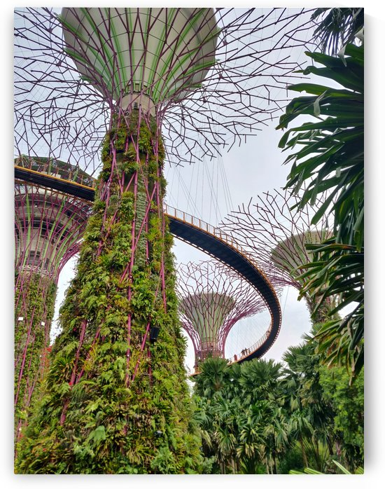 Gardens by the Bay by Isabelle Koutny