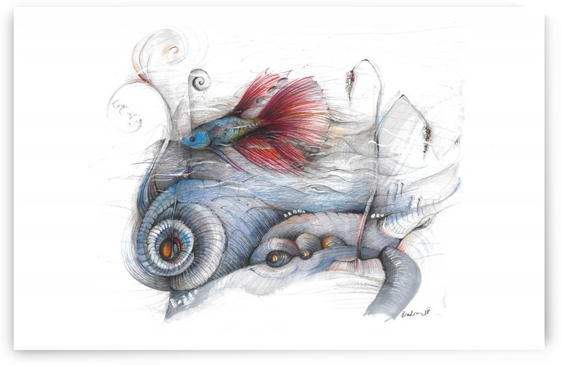 Life of a Betta fish by Marcela Bradova