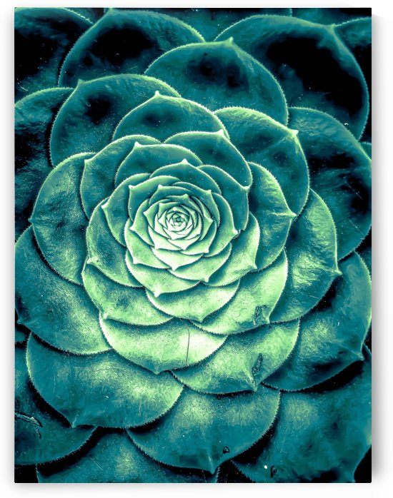closeup green succulent plant leaves background by TimmyLA