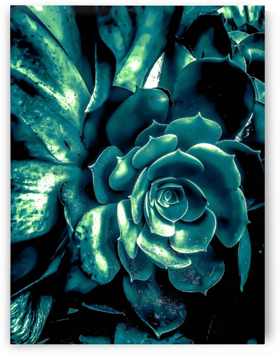 green succulent plant texture background by TimmyLA