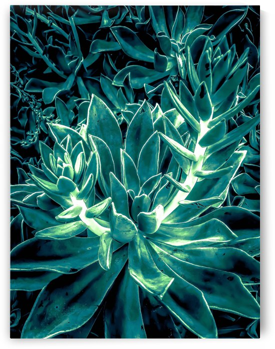 closeup green succulent plant texture background by TimmyLA