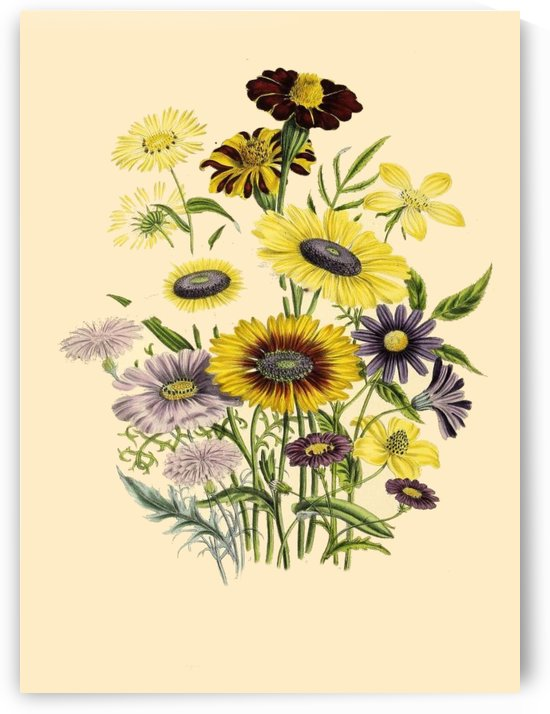 botanical print antique flora by Shamudy
