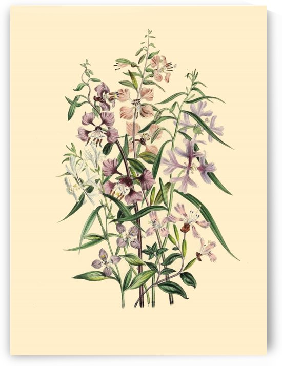 botanical print antique natural by Shamudy