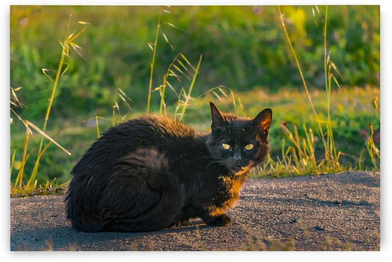 Adult Black Cat at Park by Daniel Ferreia Leites Ciccarino