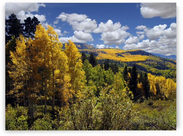 Autumn in New Mexico  by Kurt Van Wagner