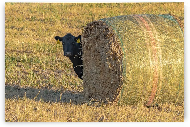 Hay.You Looking For Me by Garald Horst