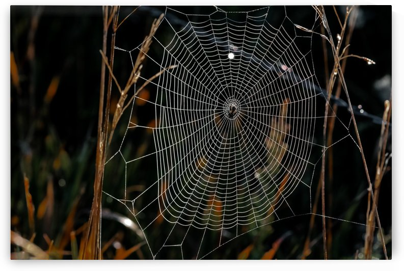 Dew Stand Out Web by Garald Horst