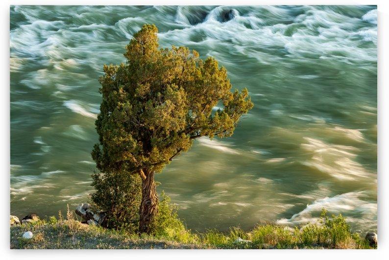 Fluid Stability by Garald Horst