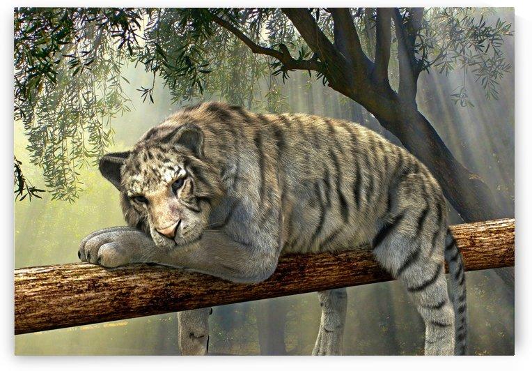 tiger animal jungle rainforest by Shamudy